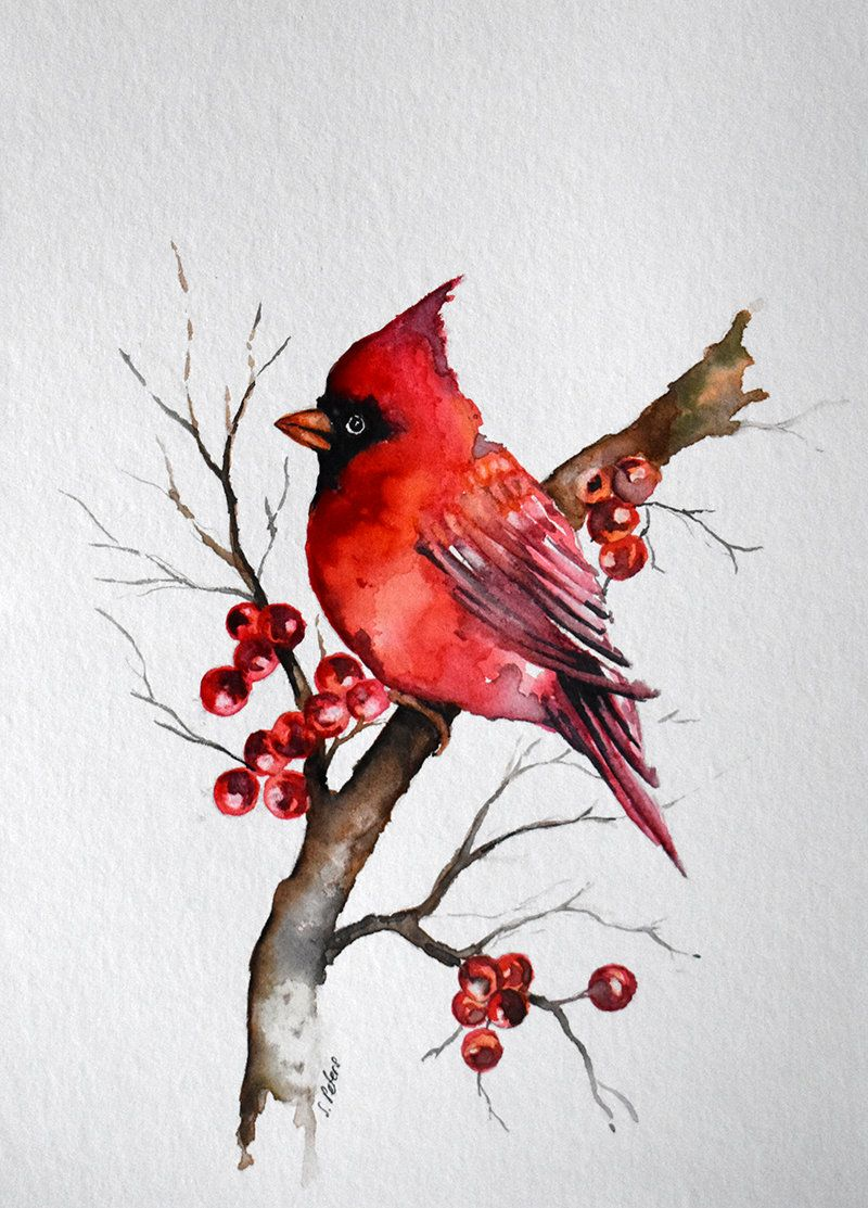 Watercolor Bird Painting Red Cardinal American State Bird Etsy