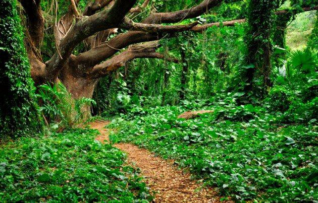 Underworld Beautiful Gardens