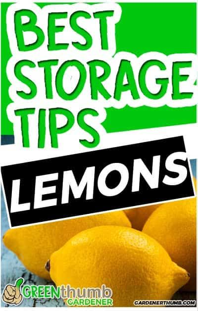 You Will Learn The Best Way Of How To Store Lemons So They 400 x 300