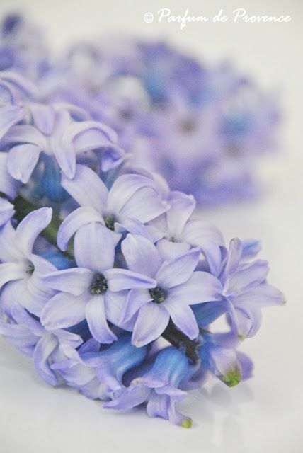 Parfum de Provence: Liliac hyacinth
