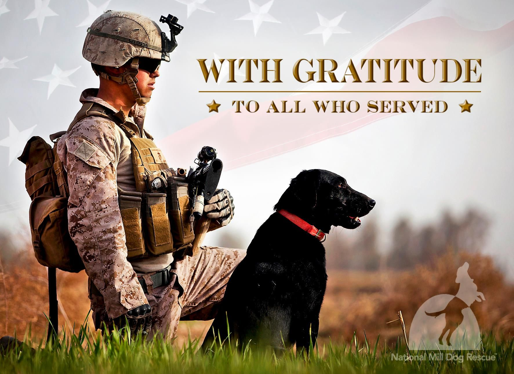Happy Veteran's Day to all our 2 legged and 4 legged