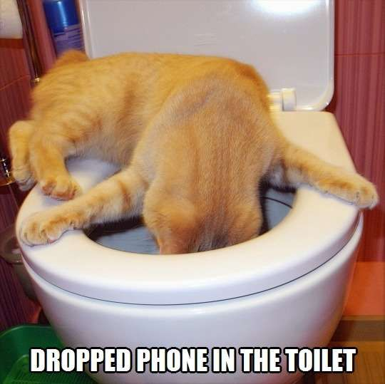 Can You Hear Me Now Funny Cat Memes Funny Animals Funny Cats