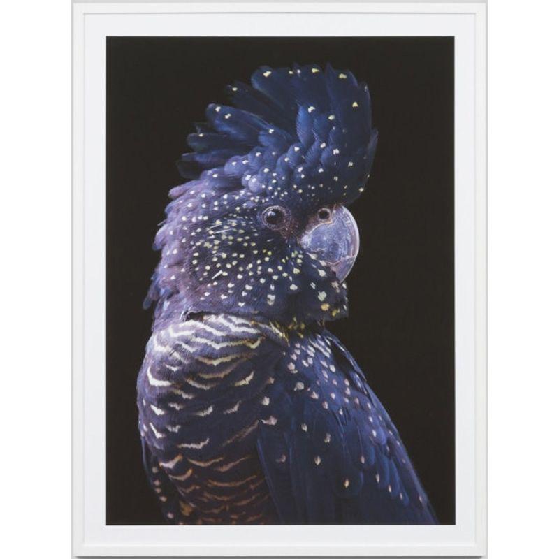 Indigo Cocky Framed Photographic Print Framed Prints Cockatoo Hanging Art