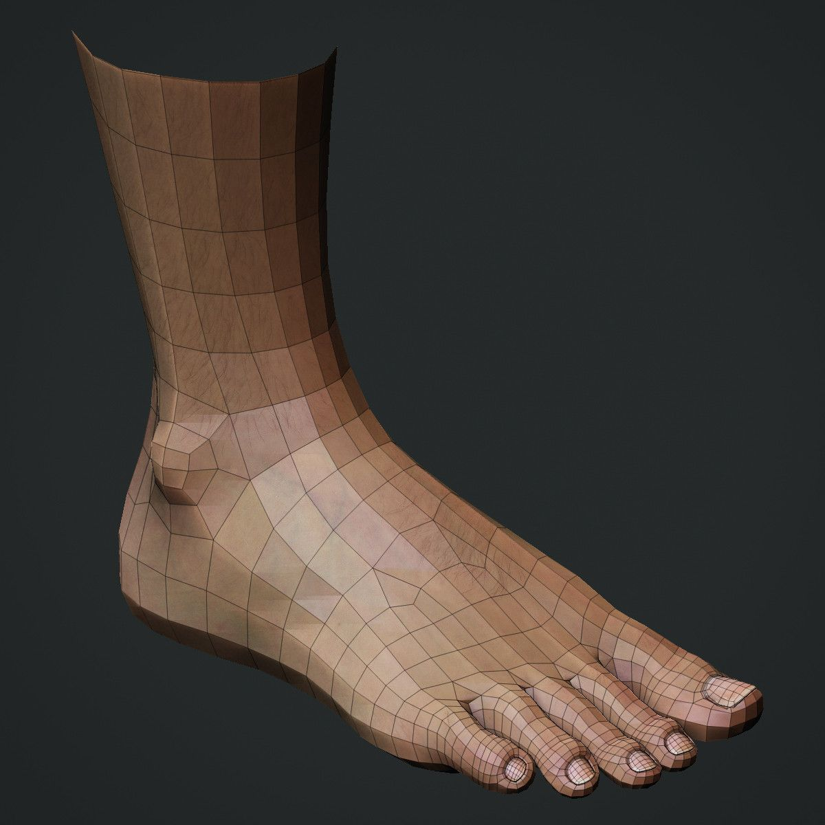 3d model realistic male foot