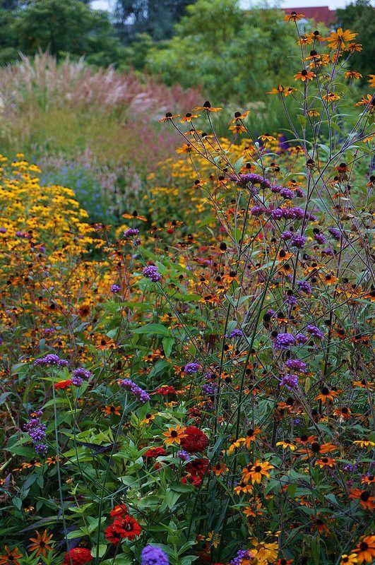 Photo of Verbena bonariensis in a mixed meadow garden