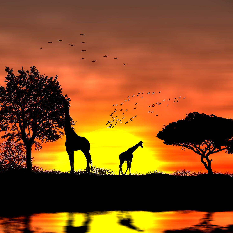 Coucher De Soleil Africain Tuto Photoshop Les Meilleurs Tutoriaux Photoshop Gratuit Coucher De Soleil Africain Paysage Peinture Facile Coucher De Soleil