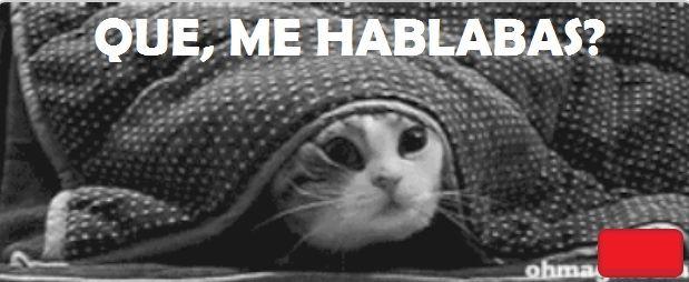 frio meme gato