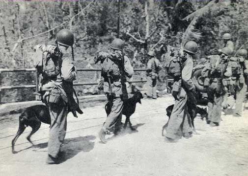 WWII Guam - USMC Doberman Devil Dog Squad