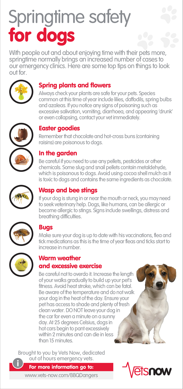 Infographic Springtime Safety For Dogs Pet Care Tips Pet