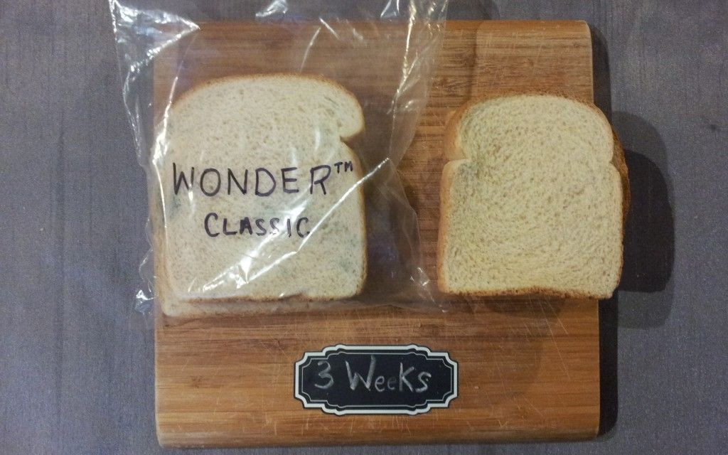 mold in bread experiment