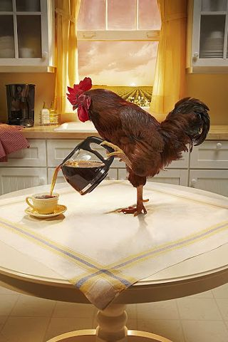 Rooster Pouring #Coffee #Funny IPhone #Wallpaper