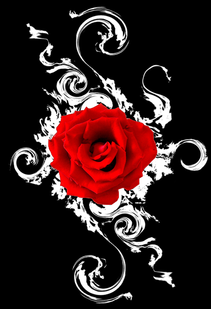 Black and red roses black rose wallpapers and black rose - Black red rose wallpaper ...