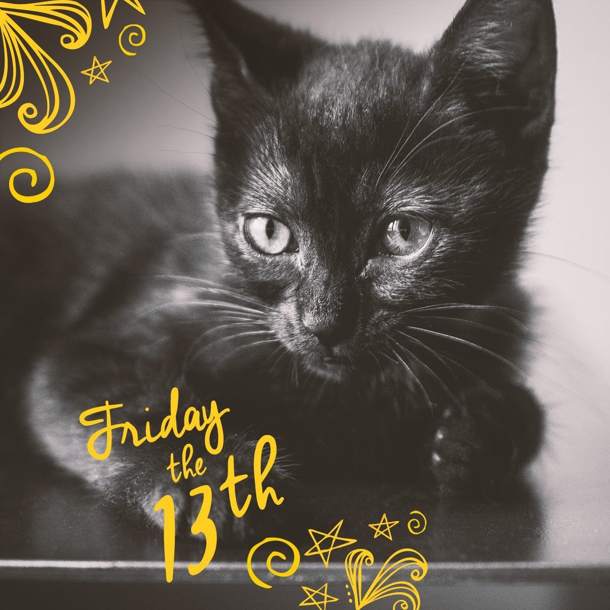 Pin by Lillian Perry on Meow Friday the 13th, Black cat