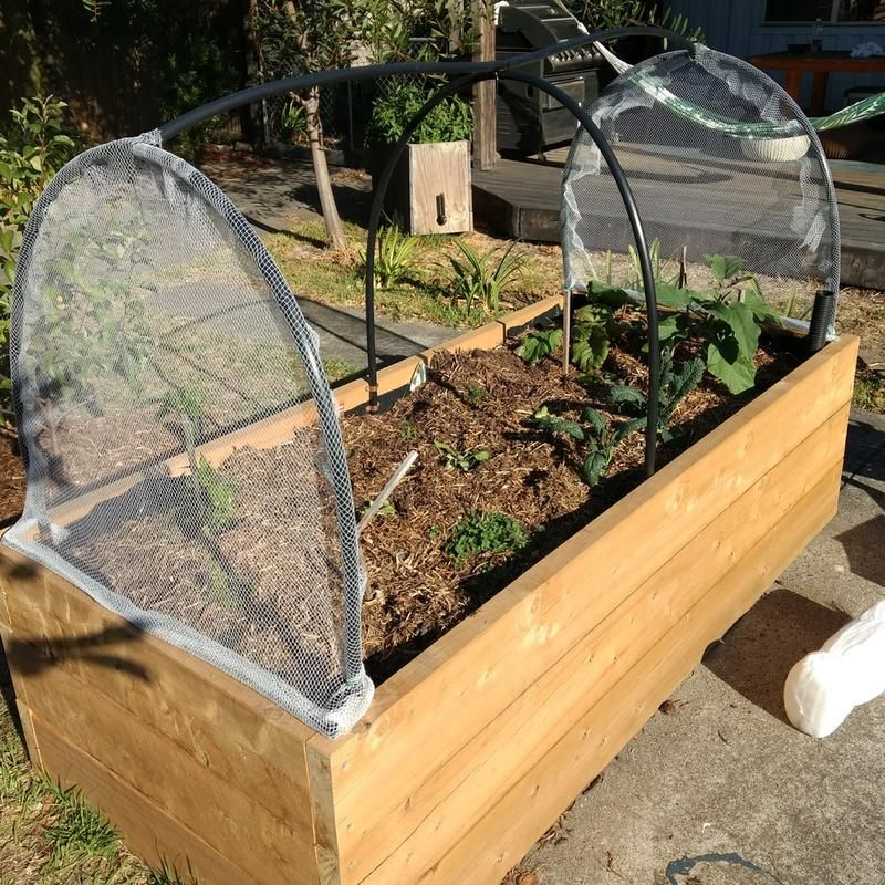 Wicking Beds, Raised