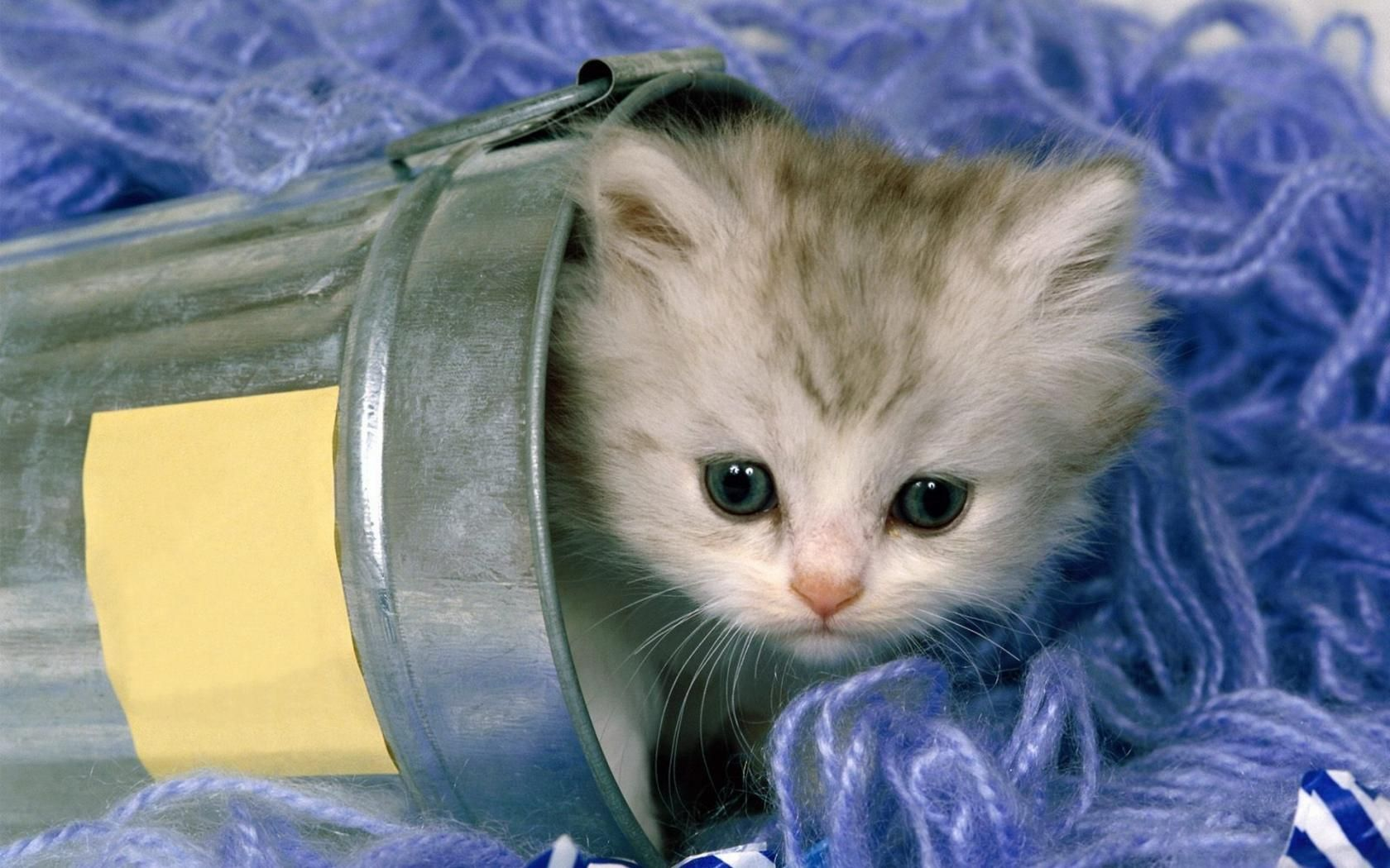 My Punk Brother Will Never Find Me In This Hiding Spot Kittens Cutest Cute Cats Kitten Wallpaper