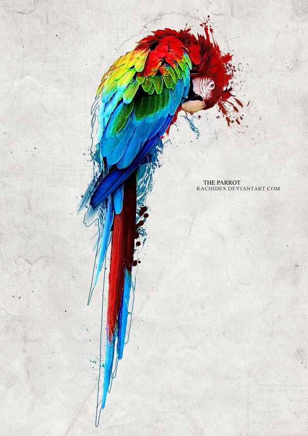 majestic birds on Pinterest | Parrots, Paint By Number and Birds
