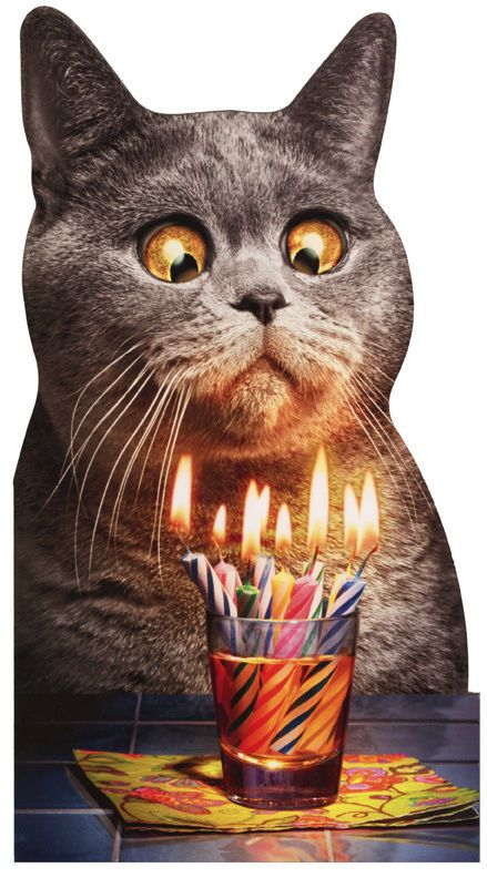 Cat Flaming Shot Oversized Funny Birthday Card Greeting Card By