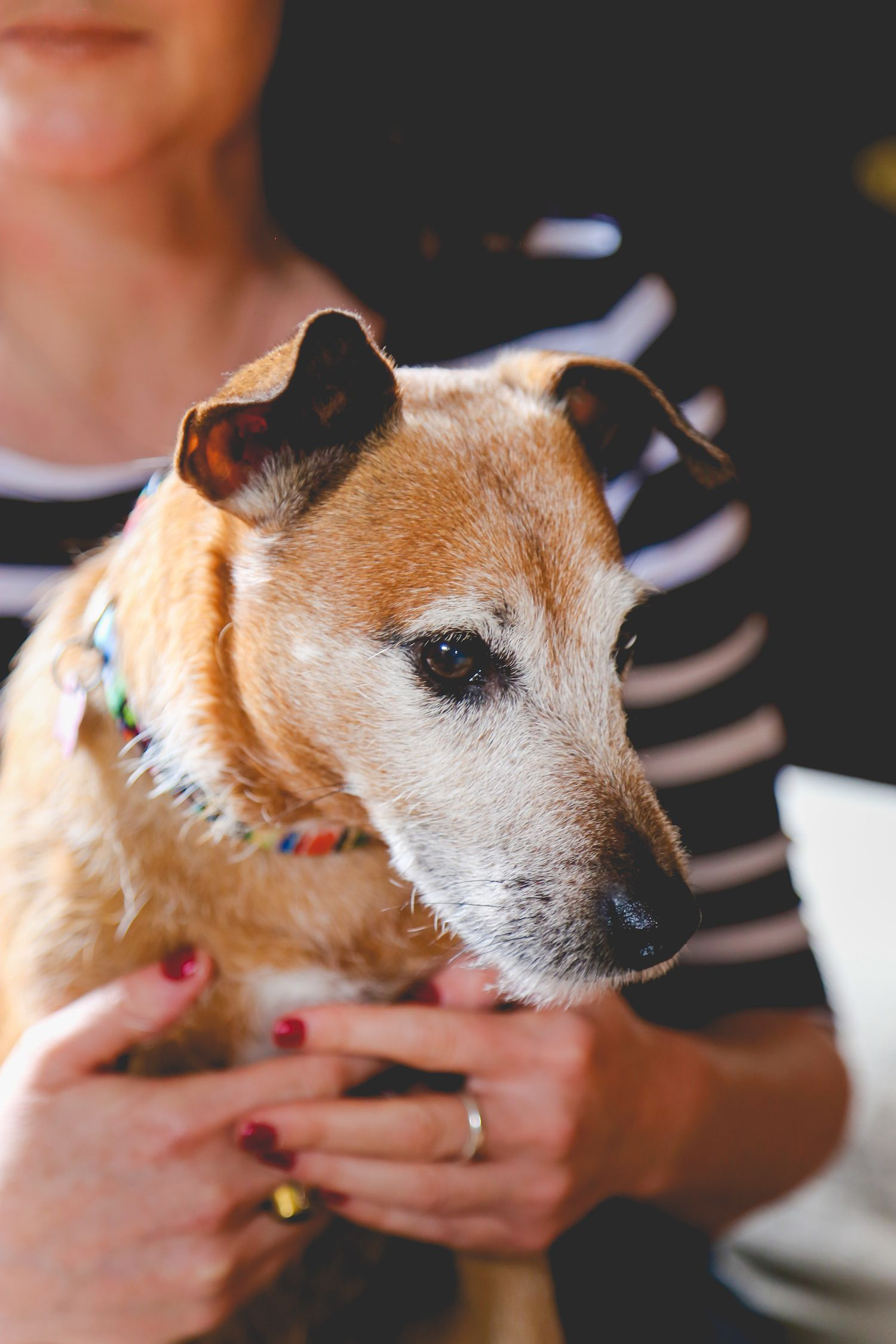 Senior dogs and dementia Ways to cope if your dog is