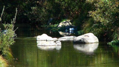 Alameda Creek Niles Canyon, 2007, Wade W. Ah You, Fremont, California spent many summers here...