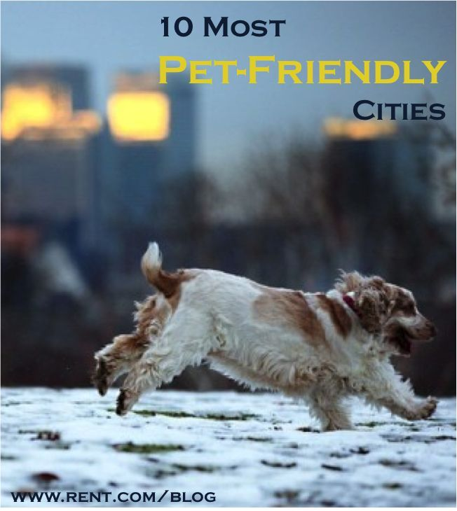 Most PetFriendly Cities Best Cities for Pets Dog