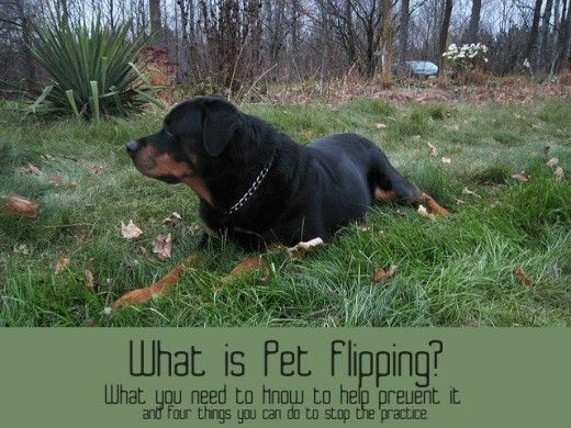 What Is Pet Flipping And Why Is It Important Dogs Pets Dog Ear