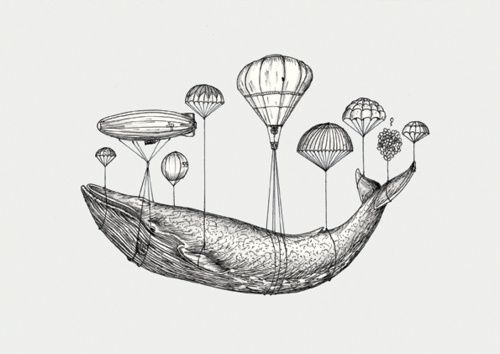 Line Drawing Jellyfish : Best sketch drawing images ideas