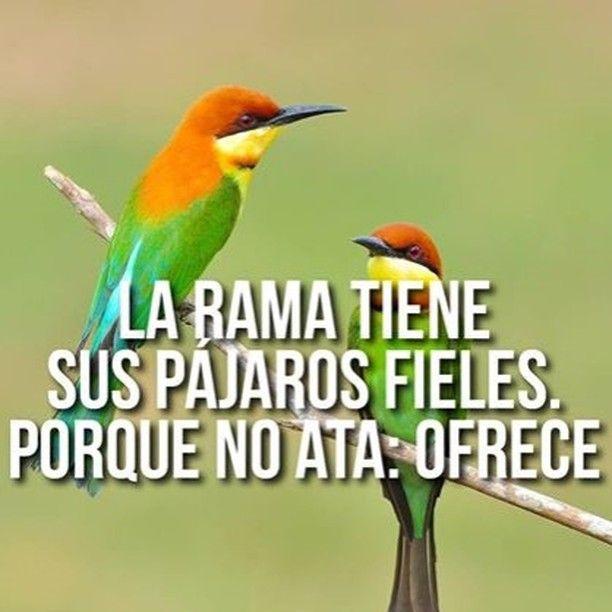 La Rama Tiene Sus Pájaros Fieles Porque Frases De Www