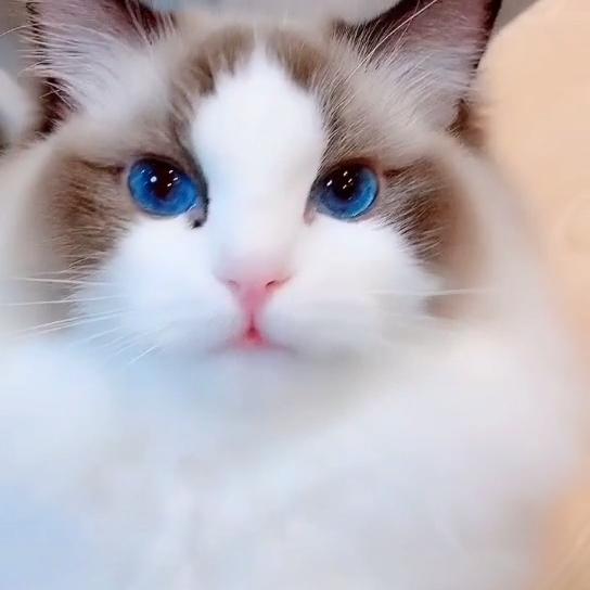Photo of blue blue eyes