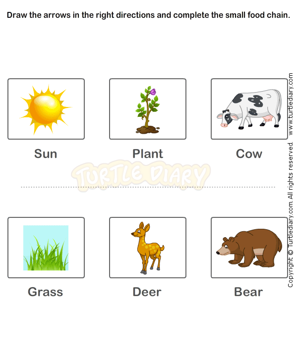 Food chain worksheet 14 science worksheets grade 2 worksheets food chain worksheet 14 science worksheets grade 2 worksheets ibookread PDF