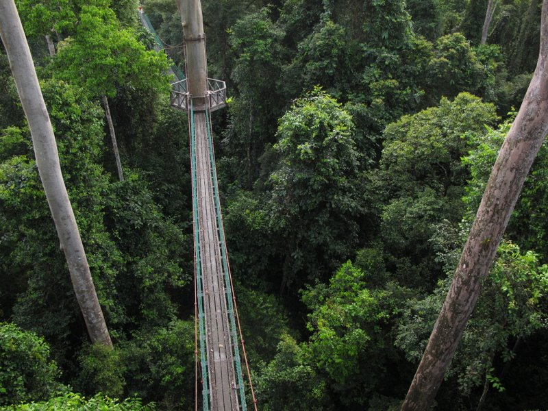 Malaysia - The Tree Top Canopy Walkway near the Borneo Rainforest Lodge & Malaysia - The Tree Top Canopy Walkway near the Borneo Rainforest ...