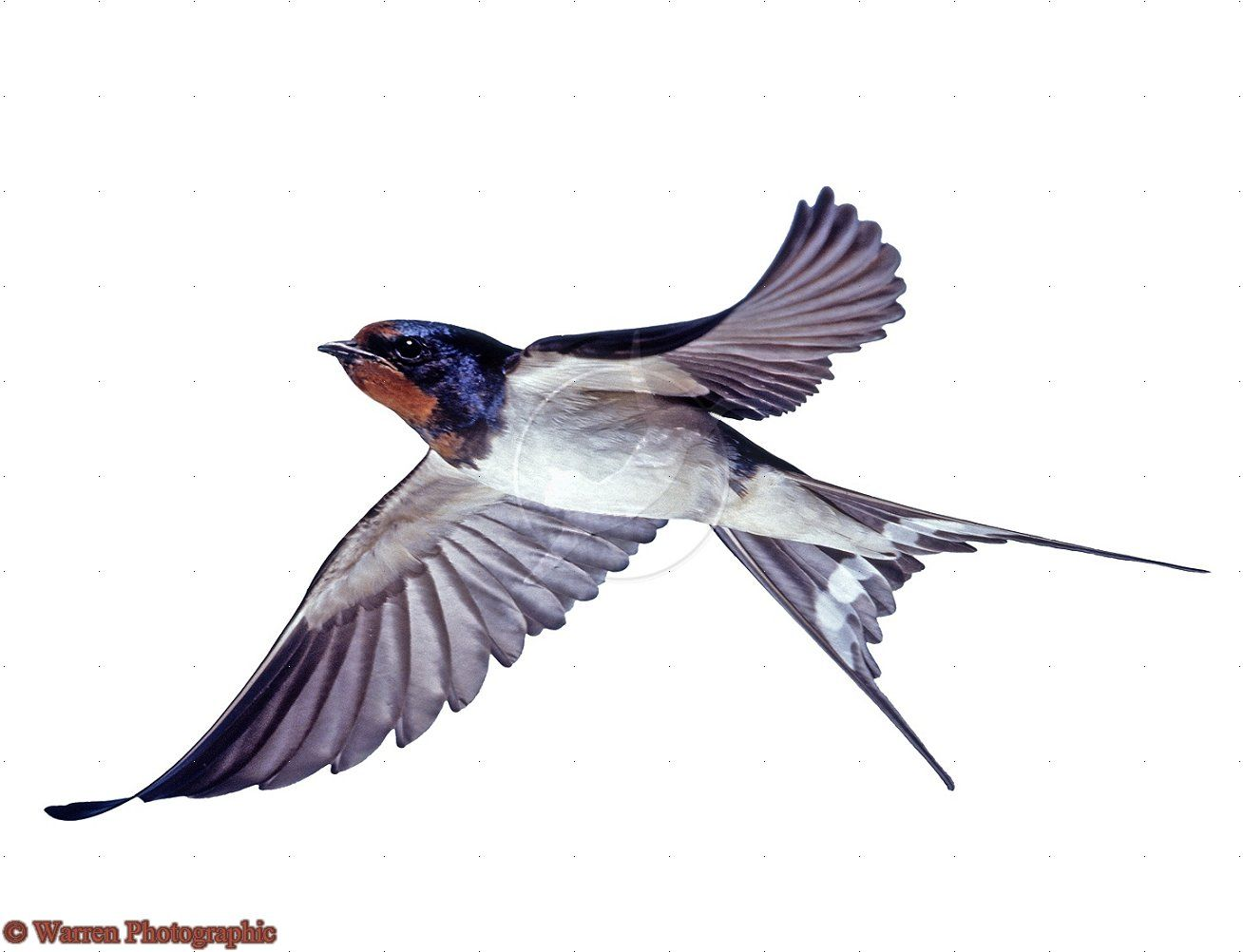 Картинка перелетные птицы на прозрачном фоне