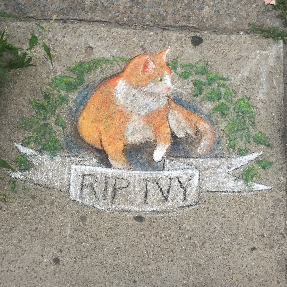 Chalk Portrait Memorial For Ivy The Resident Cat Of Ivy Insurance