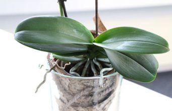 Orchideen im Glas halten - ganz ohne Erde! So funktioniert es - Gartendialog.de