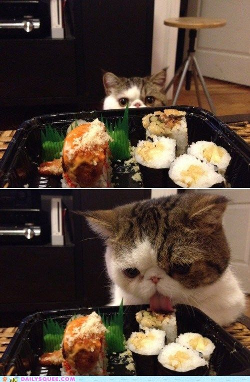 Don't leave sushi where cats can get it