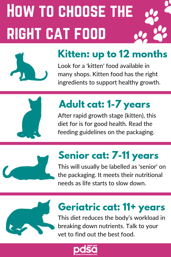 The Best Diet For Your Cat In 2020 Best Diets Cat Feeding Cats