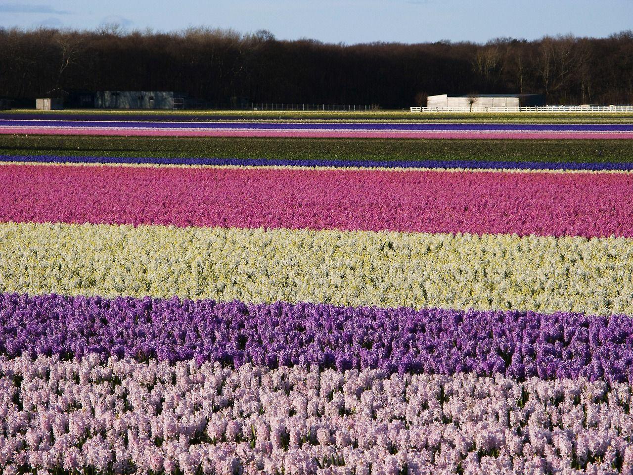 Yahoo News Photos Agricultura