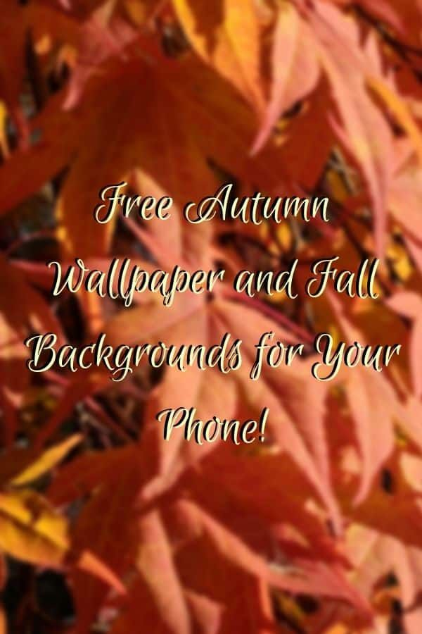 Free Autumn wallpaper and background for your smart phone #autumnwallpaper
