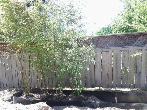 Tolle Bambus Tipps Ein Doppelter Sichtschutz | Wohnen | Pinterest ... Bambus Im Garten Tipps
