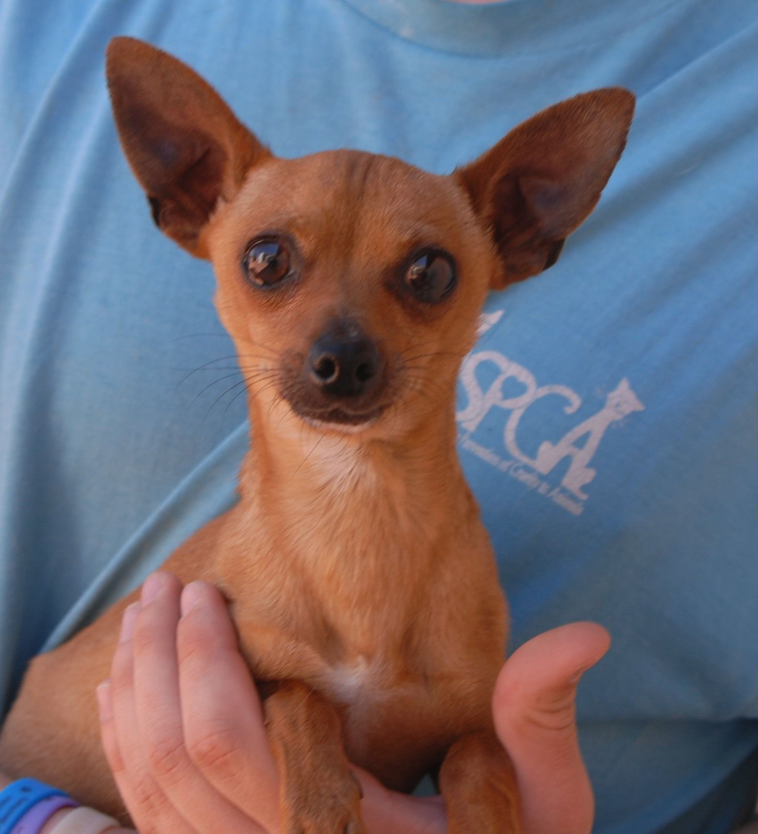 Esteban Is A Tiny 4 Pound Lovebug A Bright Eyed Youngster With A