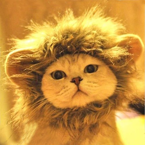 Pet Costume Lion Mane Wig for Dog Cat Halloween Clothes Fancy Dress up ears