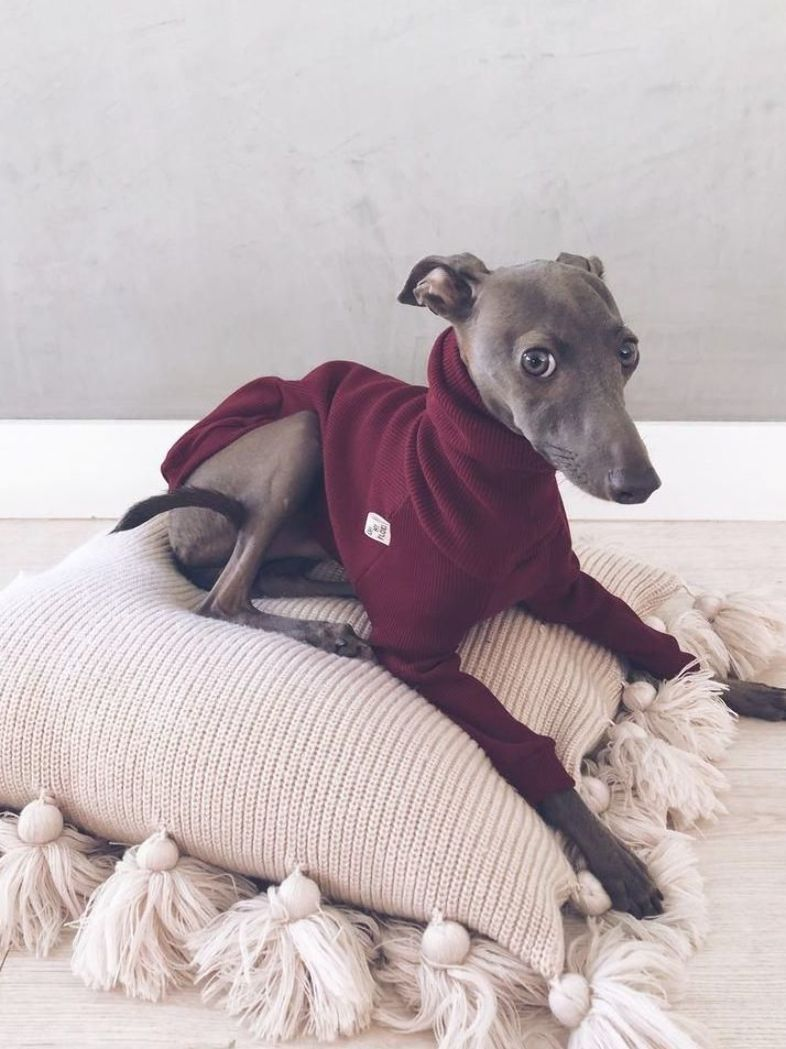 Italian Greyhound And Whippet Clothes Iggy Clothes Dog Etsy In 2020 Grey Hound Dog Whippet Dog Dog Clothes