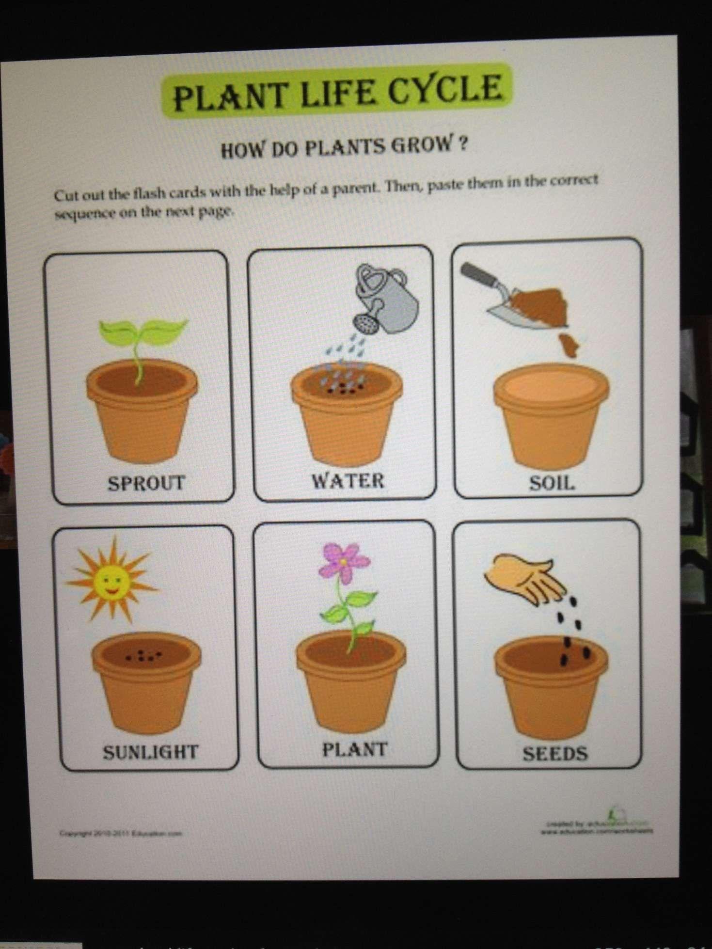 Plants Grow Preschool Worksheet And Pinliz Springer On