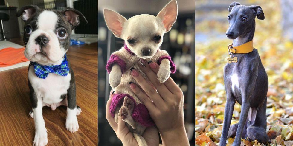 憧れのワンダフルライフ 賃貸物件で飼いやすい犬種21 犬 ワンダフルライフ バセンジー