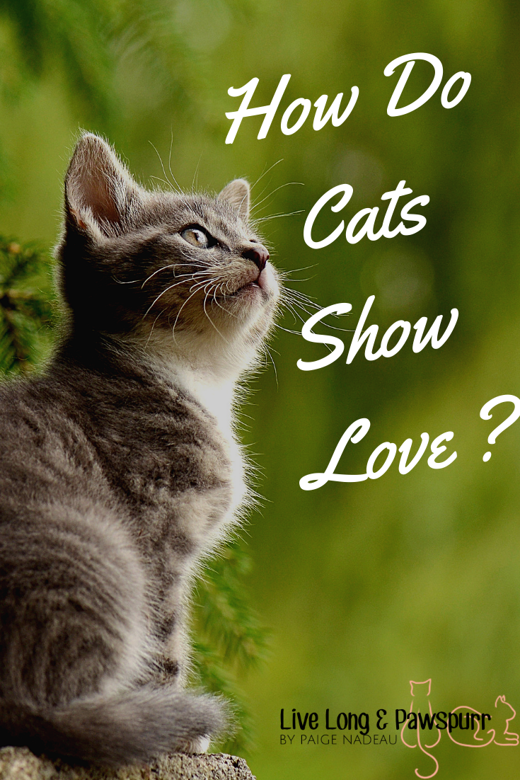 10 Ways Cats Show Their Love For You Sick cat, Cats, Cat