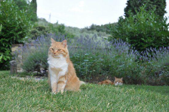 TripAdvisor cats of Tuscany | Verkauf von Öl und anderem - Foto van Residenza San Leo, Figline e ...