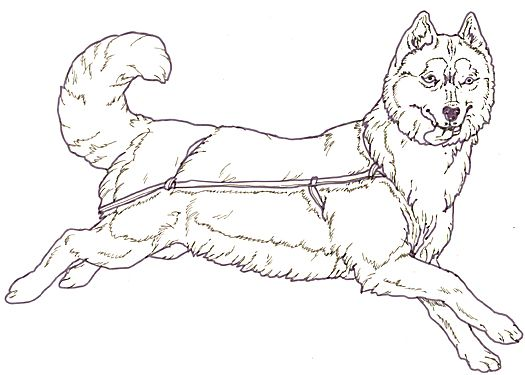 Mural Three Snow Bears Sled Dog Facing Puppy Coloring Pages Dolphin Coloring Pages Horse Coloring Pages