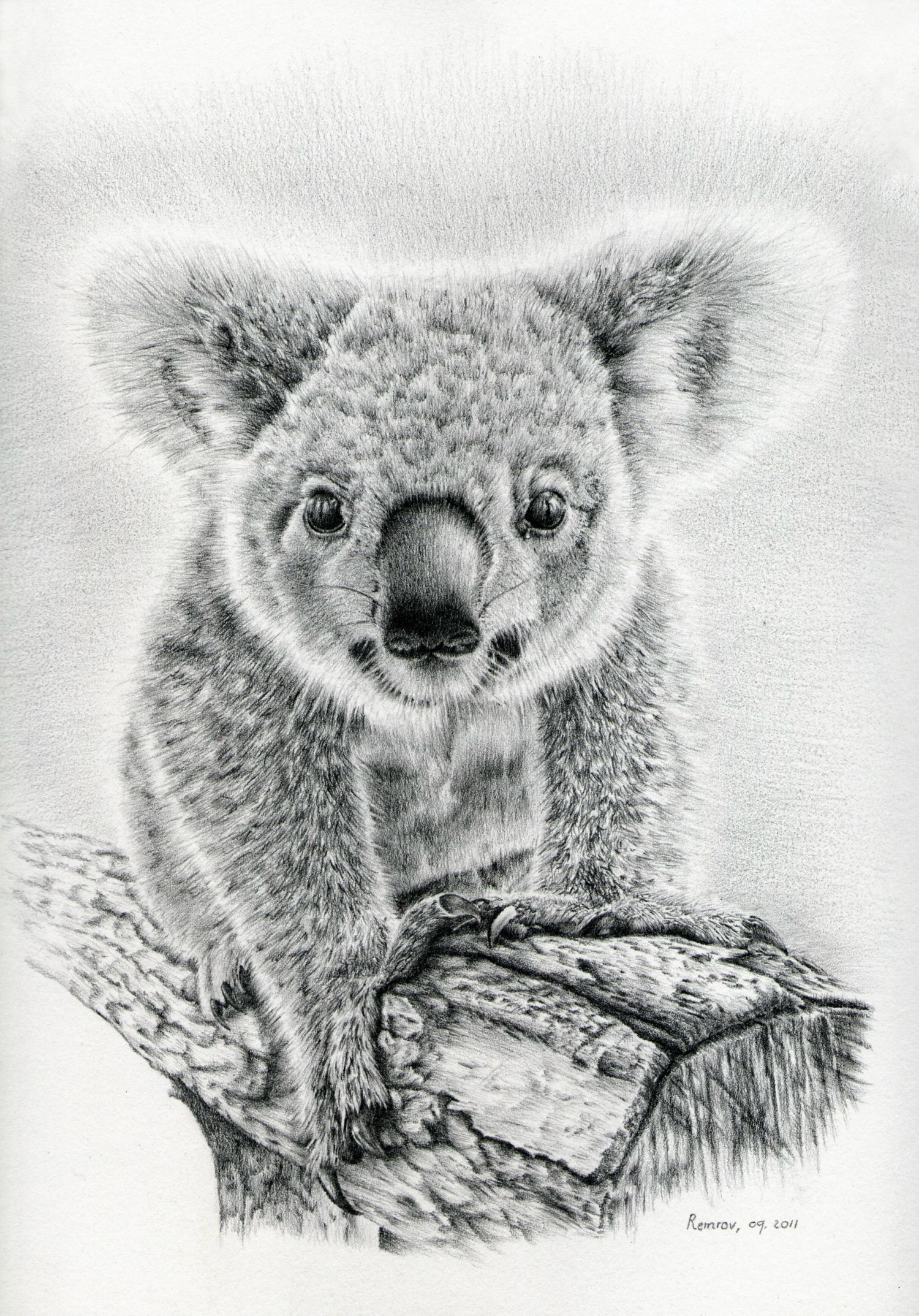 How to draw a koala pencil in stages