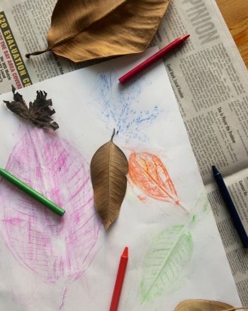 Science Fair: Leaf Rubbings: Shapes and Patterns
