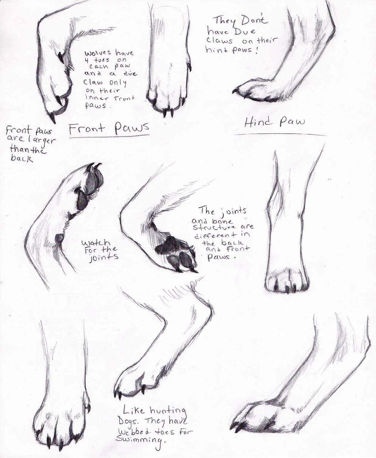 Pin by Amelia Murray on Canine Art | Pinterest | Animal anatomy ...