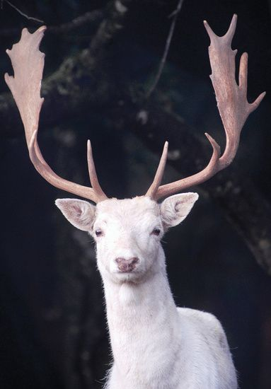 F O Forgotten Nobility Amazing Animal Pictures Albino Animals Animals